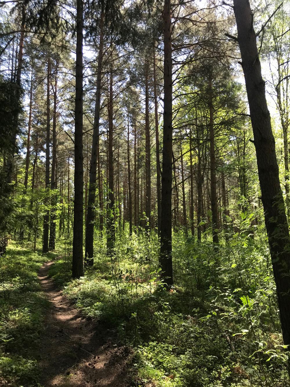 Sunt skogsbruk